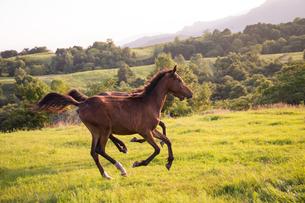牧場で走る馬の写真素材 [FYI03056823]