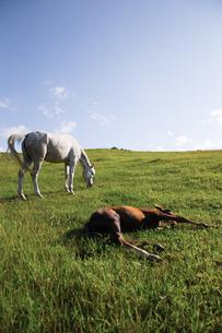 牧場の馬の写真素材 [FYI03056825]