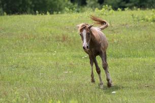 僕法で走る馬の写真素材 [FYI03056827]