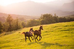 牧場で走る馬の写真素材 [FYI03056828]