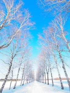 樹氷の並木道の写真素材 [FYI03056866]