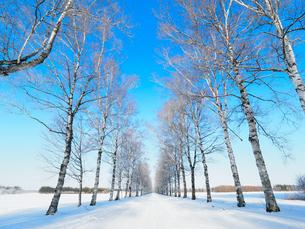 樹氷の並木道の写真素材 [FYI03056879]