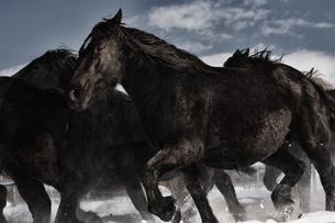 雪原を走る馬の写真素材 [FYI03056894]