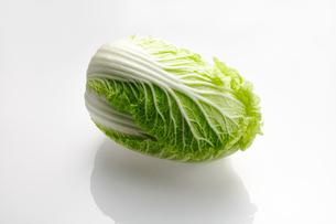白菜の写真素材 [FYI03057049]