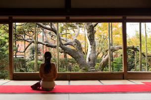秋の京都を旅する女性の写真素材 [FYI03057160]