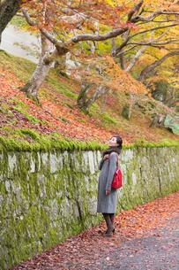 秋の京都を旅する女性の写真素材 [FYI03057191]