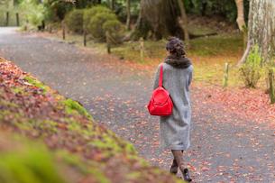 秋の京都を旅する女性の写真素材 [FYI03057200]