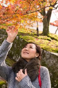 秋の京都を旅する女性の写真素材 [FYI03057204]
