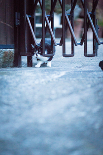 猫の写真素材 [FYI03057335]