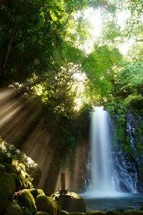 白糸の滝の写真素材 [FYI03058260]