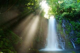 白糸の滝の写真素材 [FYI03058261]