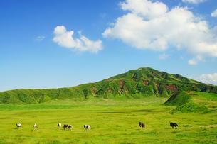 阿蘇草千里の馬の写真素材 [FYI03058279]