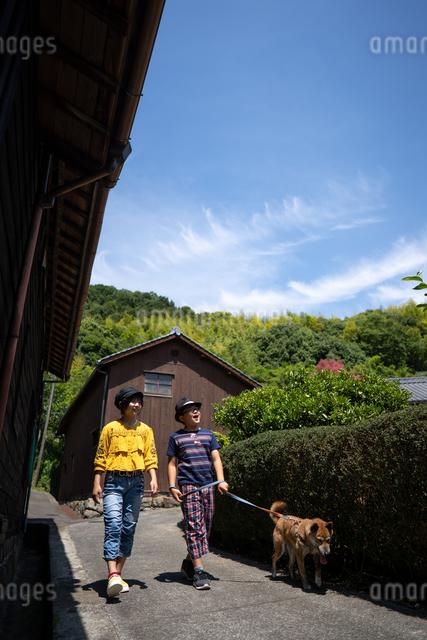 犬と散歩の写真素材 [FYI03058290]