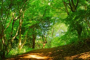 森林浴の写真素材 [FYI03058319]