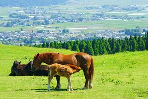 馬の親子の写真素材 [FYI03058358]