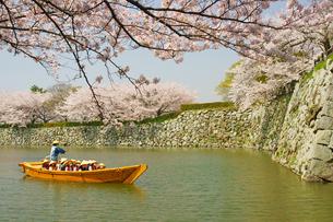 春の姫路城の写真素材 [FYI03058376]