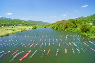 鯉のぼりの川流しの写真素材 [FYI03058485]