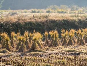 農地の光景の写真素材 [FYI03058511]