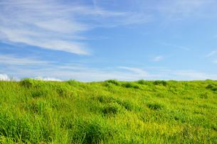 阿蘇の草原の写真素材 [FYI03058568]
