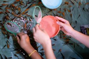 金魚すくいの写真素材 [FYI03058586]