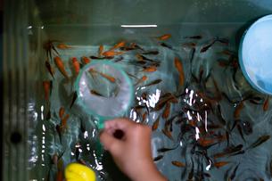 金魚すくいの写真素材 [FYI03058589]