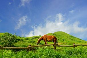阿蘇の馬の写真素材 [FYI03058595]