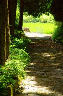 石畳の道の写真素材 [FYI03058696]