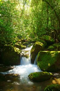 阿蘇の森の写真素材 [FYI03058877]