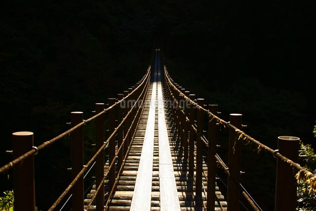 樅木の吊橋の写真素材 [FYI03058888]