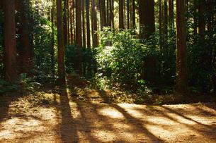 阿蘇の森の写真素材 [FYI03059086]