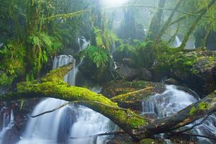 渓谷に流れる湧き水の写真素材 [FYI03059092]