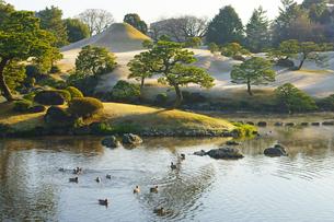 冬の朝 水前寺成趣園の写真素材 [FYI03059108]