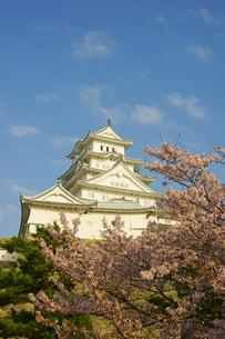 春の姫路城の写真素材 [FYI03059154]