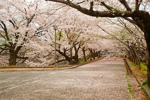 春の熊本城の写真素材 [FYI03059211]
