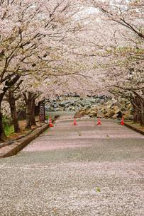 春の熊本城の写真素材 [FYI03059218]