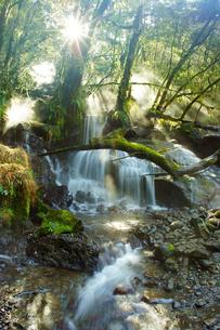 冬の菊池渓谷の写真素材 [FYI03059295]