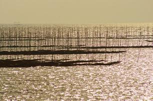 有明海の海苔網の写真素材 [FYI03059299]