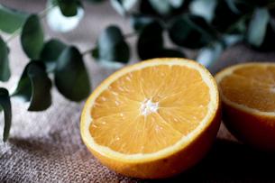 オレンジの写真素材 [FYI03059322]
