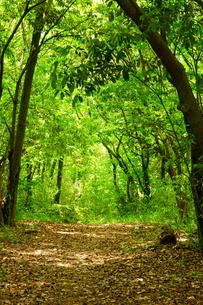 新緑の森の写真素材 [FYI03059334]