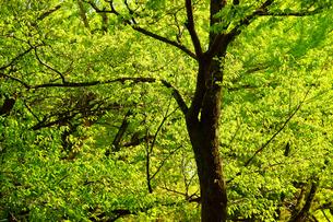 新緑の熊本城二の丸広場の写真素材 [FYI03059353]