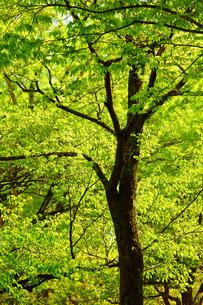 新緑の熊本城二の丸広場の写真素材 [FYI03059354]
