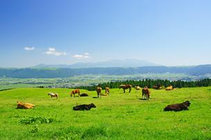 阿蘇の牧場の写真素材 [FYI03059357]