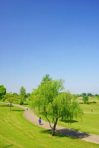 春の水前寺江津湖公園の写真素材 [FYI03059361]