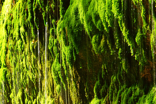 清水滝の写真素材 [FYI03059374]