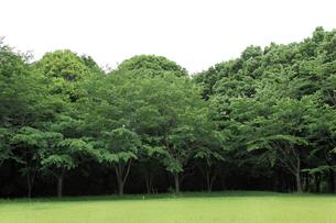 無人の緑の広がる公園の写真素材 [FYI03059509]