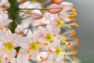 小さな花が集まって咲いている野草の写真素材 [FYI03059575]