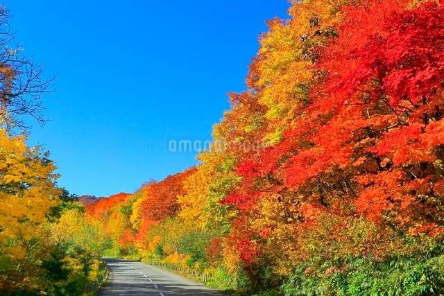松川温泉の紅葉の写真素材 [FYI03059581]