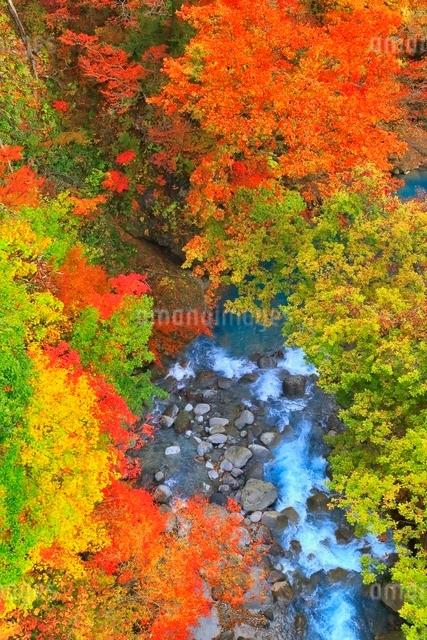 松川渓谷の紅葉の写真素材 [FYI03059583]
