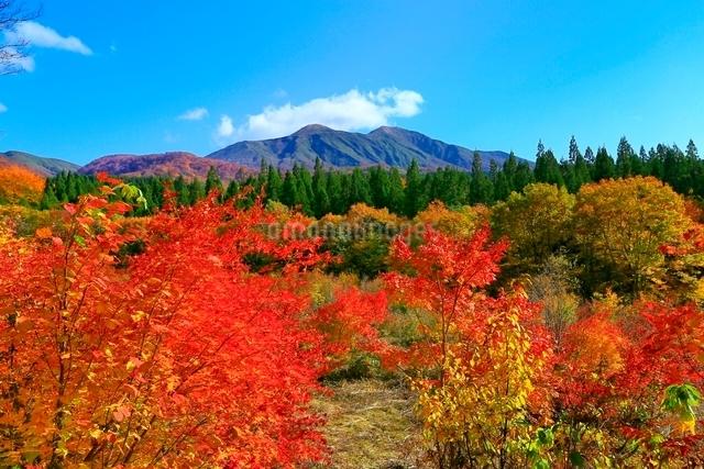 乳頭温泉郷の紅葉と秋田駒ヶ岳の写真素材 [FYI03059591]