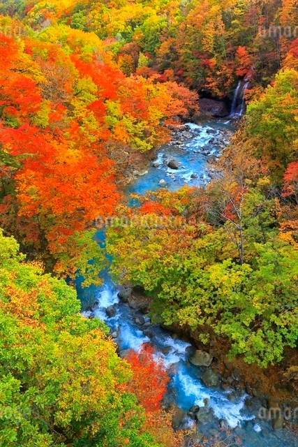 松川渓谷の紅葉の写真素材 [FYI03059593]